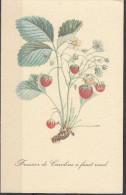 9 - Cartoncino Illustrativo - Fragaria - Fragole - Fraisier Caroline A Fruit Rond - Schede Didattiche