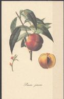 3 - Cartoncino Illustrativo - Prunus Persica - Pesche - Pavie Jaune - Schede Didattiche