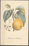 2 - Cartoncino Illustrativo - Renetta - Reinette Du Canada - Schede Didattiche