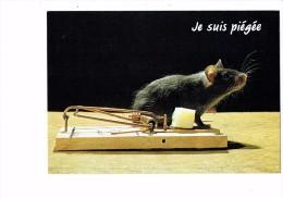 Carte Fantaisie - Je Suis Piégée - Souris Mouse Dans Une Tapette à Rat Piège Morceau De Fromage - Irex 90001 - Animaux & Faune