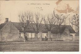 Cucq Pas De Calais Les Tilleuls - France