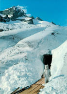 Switzerland - Suisse - Valais - Ours - Personne Dégisée En Ours - Eisgrotte Am Rhonegletscher Beim Belvédère Furkapass - VS Valais