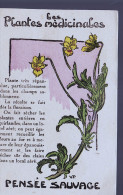 PLANTES MEDICINALES PENSEE SAUVAGE FICHE - Botanik