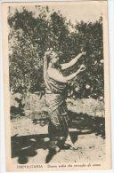 AFRICA - LIBYA -  ARAB WOMAN PICKS ORANGE  - 1930s - Libya