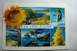La Côte D´azur - Dauphin - Fleurs Mimosas - Tournesol - Dauphins