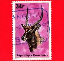 RWANDA  - Usato - 1975 - Animali - Antilopi - Waterbuck - 34 - Rwanda