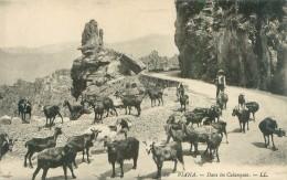 Belle  Carte     - Corse -     Piana  - Dans Les Calanques , Troupeau De  Chévres            Ag948 - Animaux & Faune