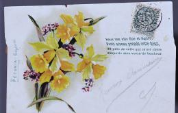 PETUNIA EN 1905 - Blumen