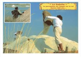 CPM FRANCE THEMES METIERS - Le Sel De Mer - La Gabelle - Otros