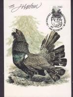 Norway Maximum Card Karte 1988 Bird Vogel Oiseau Auerhuhn (2 Scans) - Maximumkarten (MC)