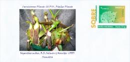 SPAIN, 2016 Carnivorous Plants (ICPS), Pitcher Plants, Nepenthes mikei, B.R.Salmon & Maulder (1995) Sumatra