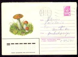 Mushroom Leccinum aurantiacum pilze USSR postally used cover from 1979 forest wild mushrooms URSS entier