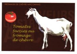 CP Recette De Cuisine, Tomates Farcie Au Fromage De Chèvre Du Mâconnais, Saône-et-Loire - Recipes (cooking)
