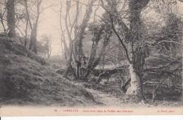 Cp , 50 , CAROLLES , Sous-Bois Dans La Vallée Des Peintres - France
