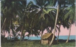 Costa  Rica :  Vue  Palmiers - Costa Rica