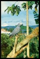 SÃO TOMÉ E PRÍNCIPE- COSTUMES - Papagaio Da Ilha Do Principe(Ed. A. Geral De Ultramar) Carte Postale - Sao Tome And Principe