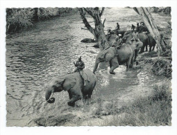 CPA CPSM Le Congo D´ Aujourd´hui Le Bain Des éléphants 1959 - Congo Francés - Otros