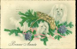 Chiens  Chien  Honden  Hond - Honden