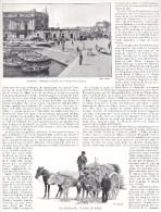 Naples Napoli Immacolatella Attelage Cheval Boeuf âne Page Recto Verso Extraite Livre Italie Illustrée - Photographie