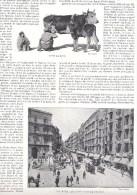 Naples Napoli - Via Roma - Traite De Vache Veau Page Recto Verso Extraite Livre Italie Illustrée - Photographie