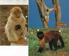 Zoo Cezallier 63420 Ardes S Couze - 3 Cartes Singes - Scimmie