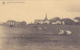 Saint-Pierre-en-Ardennes (panorama, Vaches, Edit Pinson) - Libramont-Chevigny