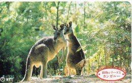 Kangourou Kangaroo Jungle Animal  Télécarte  Phonecard  Telefonkarte B 309 Bis - Japan