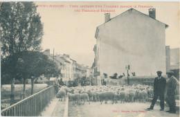 Bourg Madame. Visite Sanitaire D'un Troupeau Passant La Frontière. - Sonstige Gemeinden