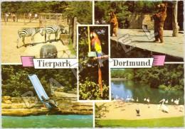 Dortmund (Allemagne) - Parc Zoologique - Quelques Spécimens Du Zoo (2) (JS) - Animaux & Faune