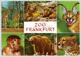 Frankfurt (Allemagne) - Zoologischer Garten - Quelques Vues - Zoofoto Ernst Müller (1) (JS) - Autres