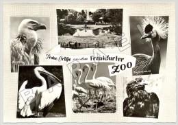 Frankfurt (Allemagne) - Zoologischer Garten - Quelques Vues (3) (JS) - Autres