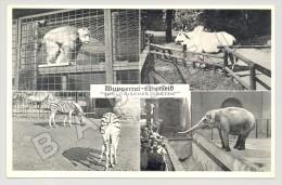 Wuppertal (Allemagne) - Zoologischer Garten - Quelques Vues (JS) - Animals