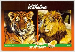 Stuttgart-Bad Cannstatt (Allemagne) - Wilhelma - Zoologische Garten - Tigre Et Lion (JS) - Autres