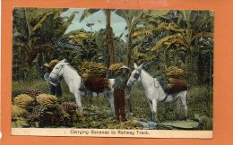 Carrying Bananas To Raillway Track - Costa Rica - Costa Rica