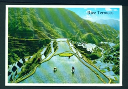 PHILIPPINES  -  Mountain Province  Rice Terraces  Unused Postcard - Philippines