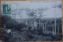 Guadeloupe - Grande Terre - Moule - Paysage Dans Les Grands Fonds - Plan Inhabituel - Vache - (n°5570) - Guadeloupe