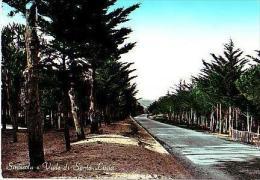 Siniscola       H1041      Viale Di Santa Lucia         ( Voir Timbre ) - Nuoro