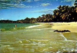 Divers       H2       Plage De Maloudja - Comoros