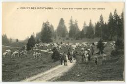 39 - CHAINE DES MONTS DU JURA - LE DEPART D'UN TROUPEAU APRES LA VISITE SANITAIRE - France