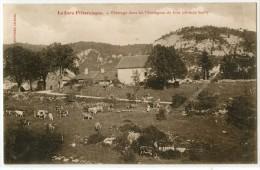 39 - LE JURA PITTORESQUE - PATURAGE DANS LES MONTAGNES DU JURA - France