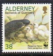 ALDERNEY GB - 2000 38p PEREGRINE FALCON & YOUNG STAMP FINE MNH **  SG A143 - Eagles & Birds Of Prey