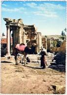 AK ASIEN Libanon Baalbek  CAMEL -DRIVERS ANSICHTSKARTE - Liban