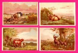 6 Chromos Sur Le Thème Des Animaux - Chevaux - Cerfs - Brebis - Moutons - Vaches - Chiens - Étable - Kaufmanns- Und Zigarettenbilder