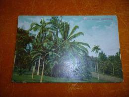 BC11-3-1 LC146 Singapour Singapore Botanical Gardens - Singapour