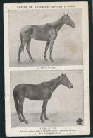 PUBLICITÉ - CHEVAUX - HORSE - Carte Pub Pour FARINE DE NUCLEINE LAVOCAT à LYON - Publicité