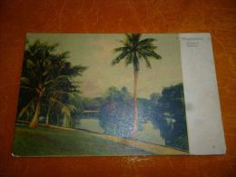 BC11-3-1 LC146 Singapour Singapore Botanic Garden - Singapour