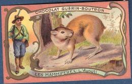 Chromo Chocolat Guerin-Boutron Les Mammifères L´agouti Rongeur Amérique Antilles - Guerin Boutron