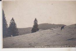 Württ Allgau Der Schwarze Grat - Unclassified