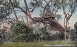 Florida Daytona Rustic Seat In Big Tree