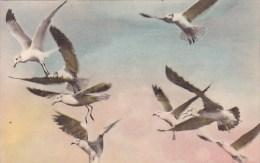 Sea Gulls Acadia National Park Bar Harbor Maine Handcolored Albertype - Stati Uniti